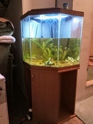 55 gallon corner Glass aquarium with stand for Sale in Forest Grove, OR