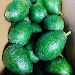 Avocados $10 for Each Box for Sale in Bonsall, CA