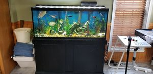 75 gallon fish tank, stand, canister filter, day/night LED light for Sale in Manassas, VA