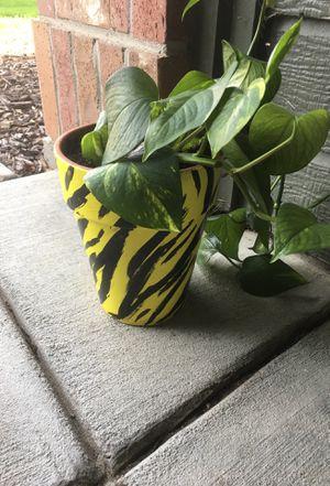 Pothos houseplant for Sale in Denver, CO