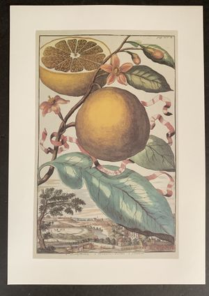c1800 Fruit Engraving Art 1980 repro NOS for Sale in Middletown, CT