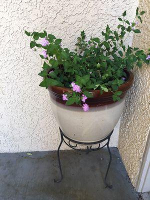 Real flowers lantana for Sale in Las Vegas, NV