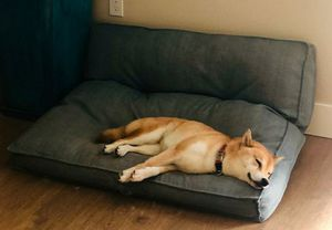 King (dog) sized bed, great condition for Sale in Campbell, CA