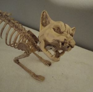 Cat Skelton eyes light up and it meows for Sale in Stockton, CA