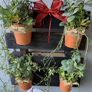 Succulent En Base De Madera for Sale in Bell Gardens, CA