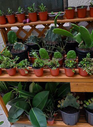 Cactus. Succulents. $3 each for Sale in Deerfield Beach, FL