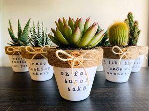 Button cute succulents & cacti for Sale in Irvine, CA