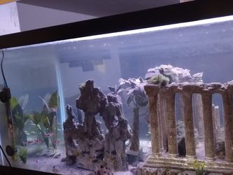 All Included! 40 Gallon Tank with 23 Fish (5+9+9) and accessories for Sale in Pasadena,  CA