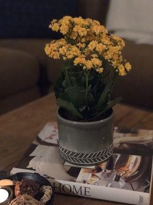 NEW POTTERY W/ PLANT for Sale in Santa Clarita, CA