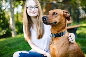 Dog boarding & sitting for Sale in Everett, WA