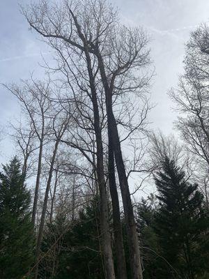 Tree work for Sale in Chesapeake, VA