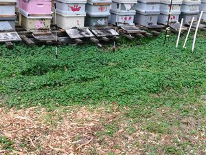 Bee hives for sale for Sale in Agawam, MA