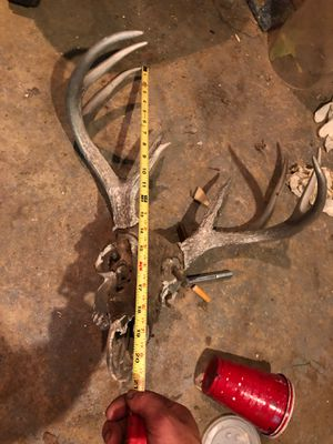 Deer head 9pnt for Sale in Saint James, MO
