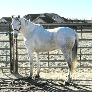 Caballo/ Horse for Sale in Salinas, CA