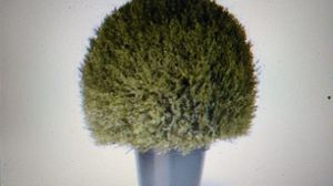 "National Tree 24"" Cedar Pine Topiary in Green Plot for Sale in Warren Park, IN"