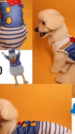 NEW DOG CLOTHES / /CLOTH FOR DOGS Sizes M, L, XL, XXL for Sale in Glendale,  CA