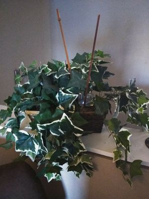 Faux Ivy Plant in Wicker Basket with Bamboo sticks for Sale in Winter Park, FL