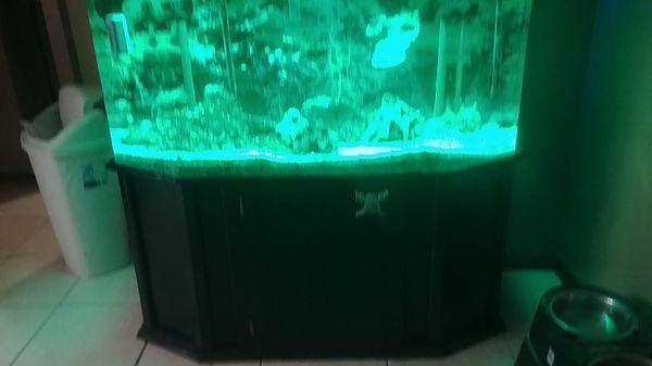 60 gallon saltwater acrylic aquarium