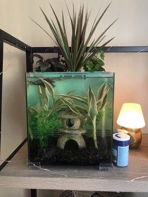 New 2.5 gallon aquaponic fish tank for Sale in Tampa, FL
