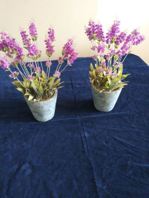 2 plants for Sale in Ellenwood, GA