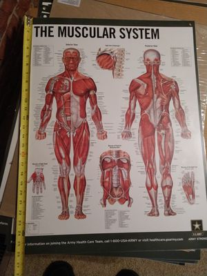 Muscle anatomy poster for Sale in Appomattox, VA