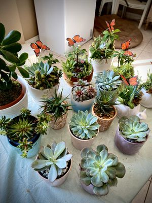 Mix Cactus & Succulents in pots 10$ each!! for Sale in West Covina, CA