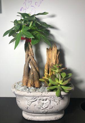 Grand Garden Plant Pot for Sale in Pico Rivera, CA