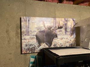 Large horizontal moose art canvas wrapped on wooden frame for Sale in Cheshire, CT