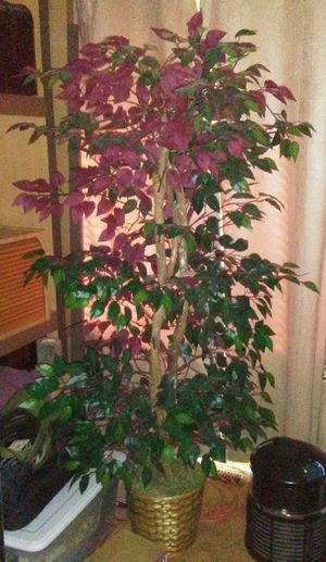 Very Nice Pretty Colored Leaves - Artificial Plant!!! for Sale in Vancouver, WA