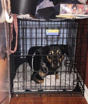 Dog kennel for Sale in Mount Laurel Township, NJ