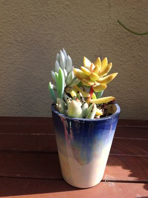Succulent arrangement for Sale in Gardena, CA