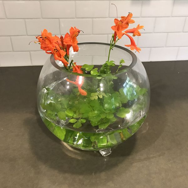 Clear Round Fish Bowl or Flower Vase