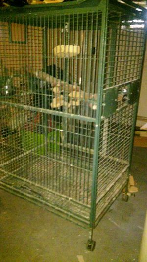 Bird Cage for Sale in Cheektowaga, NY