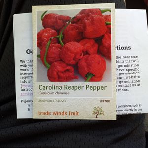 Carolina Reeper Seeds for Sale in San Luis Obispo, CA