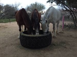 🐎 Horse & Cattle Feeders Planters Pond Large Tractor Tires 🐴 Read for full pricing for Sale in Tempe, AZ
