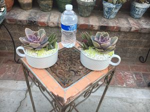 Two beautiful cups with different type of succulent $12 each or)20 both for Sale in Bloomington, CA