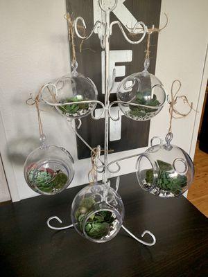 Plastic Terrarium Globe Hanging Plant Holders for Sale in Deltona, FL