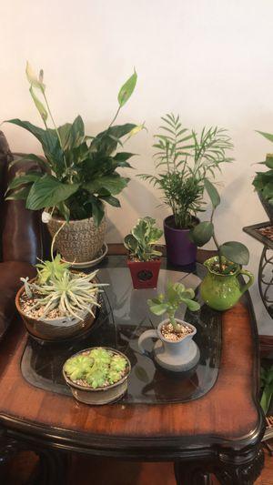 Varieties of house plants, please read description for Sale in Aurora, CO
