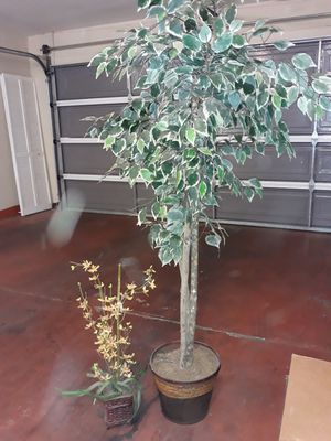 Two decoration plants for Sale in Glendale, AZ