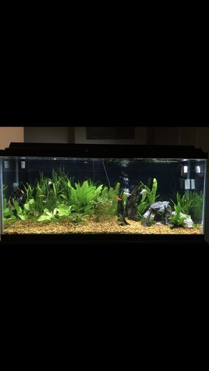 Aquarium/Fish Tank & Stand - 55 Gallons[Fluval 307 Filter] for Sale in Kissimmee, FL