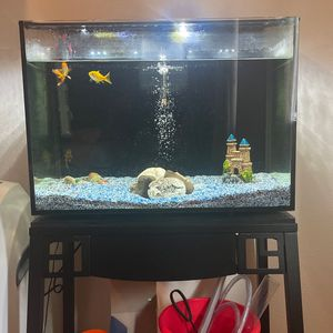 20 Gallon Fish Tank With Stand Filter Heater And Fish! for Sale in Bonney Lake, WA