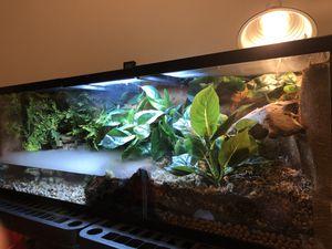 Terrarium (not for sale) reptile tank, fish tank for Sale in San Dimas, CA