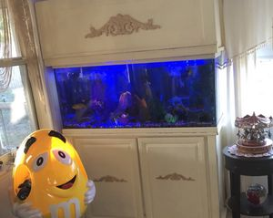 Fish tank 75 gallons everything including 🔥🌹🔥🌹 for Sale in Clearwater, FL