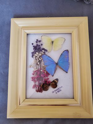 Genuine Butterfly art frame for Sale in Annapolis, MD
