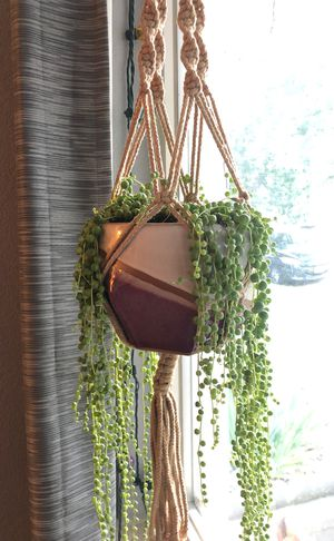 Hanging plant, pot, and string of pearls succulent for Sale in Denver, CO