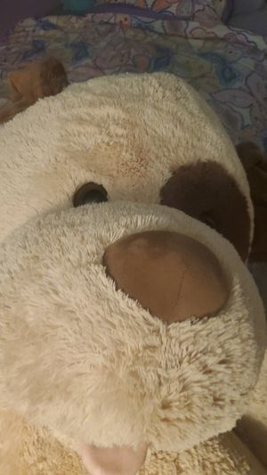 Large teddy bear for Sale in Dedham, MA