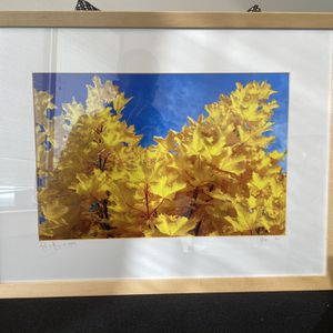 Framed Original Nature Photograph for Sale in Los Angeles, CA