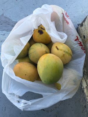 MANGOES FOR SALE !!! for Sale in Lake Worth, FL