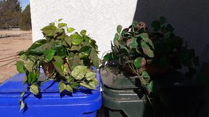 Fake house plants for Sale in Apple Valley, CA