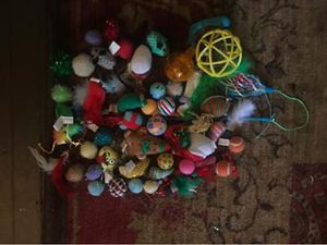Cat toys for Sale in Morgantown, WV